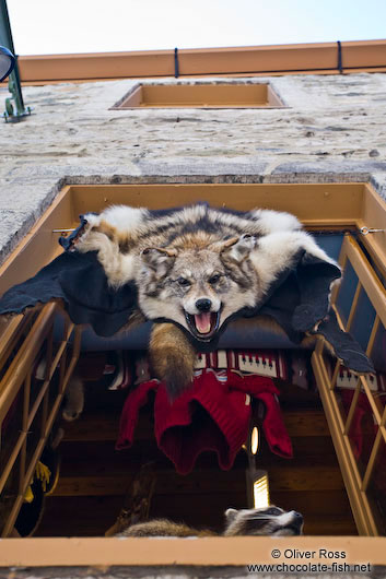 Wolf hide for sale in Quebec´s old town