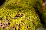 Travel photography:Tiny frog in Quebec´s Mont Tremblant National Park, Canada