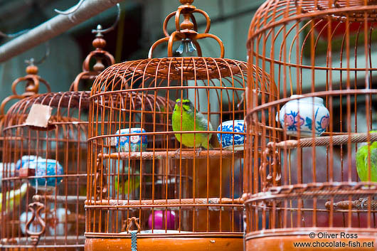 Caged birds at he Hong Kong bird market