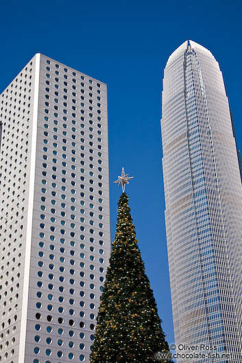 Hong Kong high rises with Christmas tree