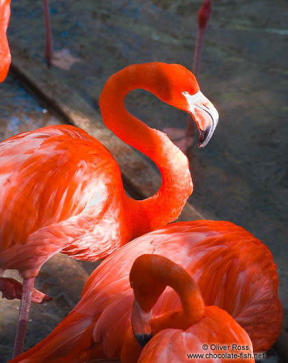 Flamingoes in Hong Kong´s Zoological Garden