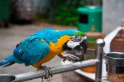Travel photography:Parrot at the Hong Kong bird market , China