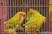 Travel photography:Caged birds at the Hong Kong bird market , China