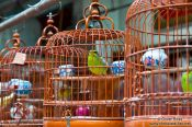 Travel photography:Caged birds at he Hong Kong bird market , China