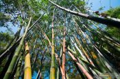 Travel photography:Bamboo grove in Hong Kong´s botanical garden, China