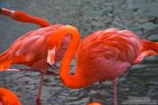 Travel photography:Flamingoes in Hong Kong´s Zoological Garden, China