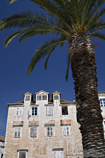 Palm tree with house in Trogir