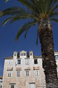 Travel photography:Palm tree with house in Trogir, Croatia