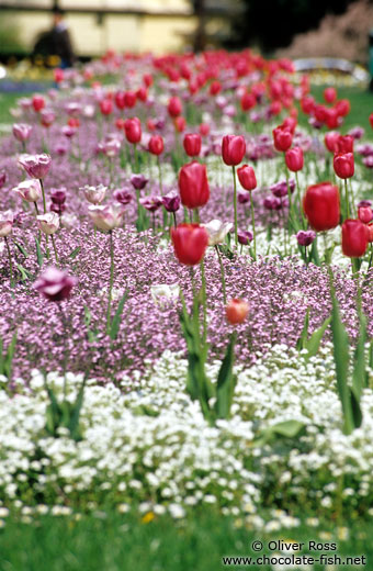 Tulip bed outside Zagreb theatre