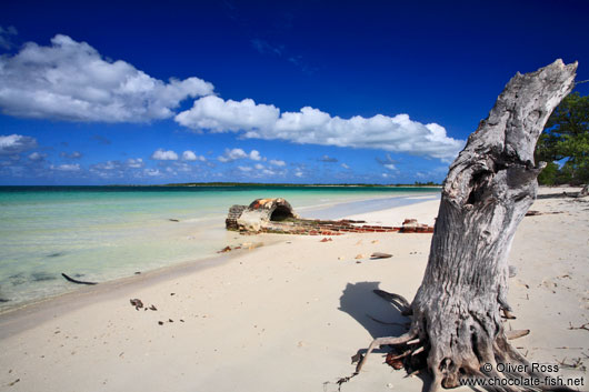 Tree trunk at Cayo-las-Bruchas beach