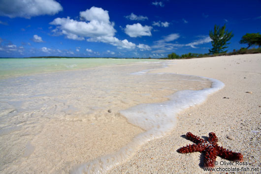 Red sea star at Cayo-las-Bruchas beach