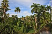Travel photography:Cienfuegos botanical garden, Cuba