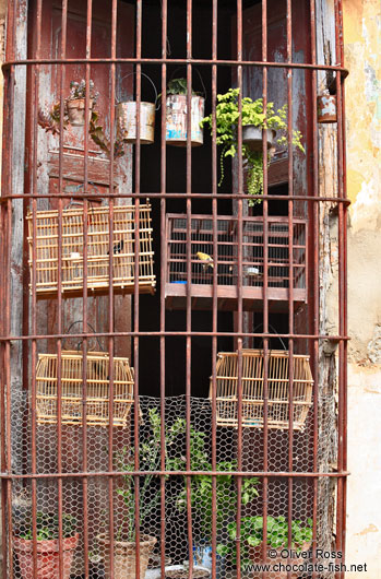 Doubly caged birds in Trinidad