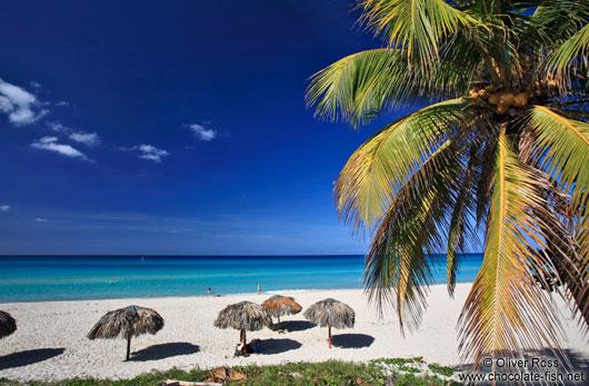 Sun Umbrellas And Palm Tree On A Beach In Varadero