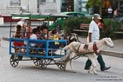 Travel photography:Goat wagon in Santa-Clara, Cuba