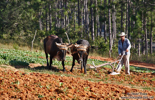 Vinales-ploughing-the-field-3551