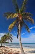 Travel photography:Palm tree on a beach in Cayo-Jutías, Cuba