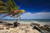 Travel photography:Palm trees with debris on a beach in Cayo Jutías, Cuba