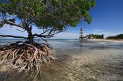 Travel photography:Beach mangrove in Cayo-Jutias, Cuba