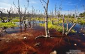 Travel photography:Swamp in Cayo-Jutias, Cuba