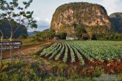 Travel photography:Viñales small hut with tobacco field, Cuba