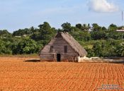 Travel photography:Viñales tobacco field with drying hut, Cuba