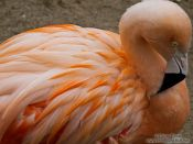 Travel photography:Flamingo in the Orangerie park in Strasbourg, France