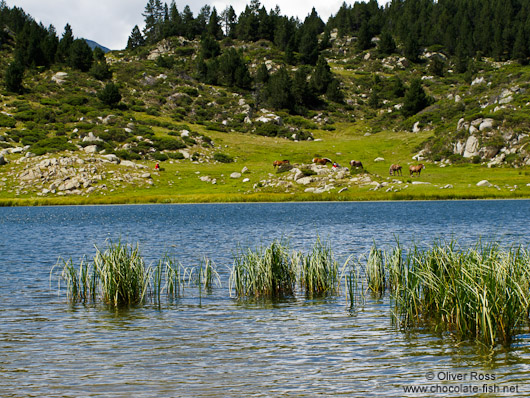 The Estany de la Pradella