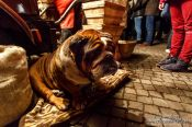 Travel photography:Dog at the Gengenbach Christmas market, Germany