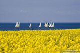 Travel photography:Rape field near Kiel with the Baltic sea in the background, Germany