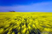 Travel photography:Rape field explosion, Germany
