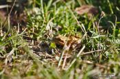 Travel photography:Small frog in Kiel forest, Germany