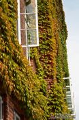 Travel photography:Ivy Facade, Germany