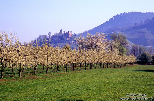Flowering orchard with Schloss Ortenberg at the foot of the Black Forest