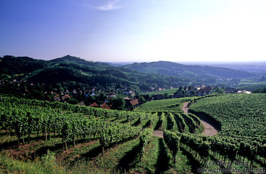 Vineyards above the village of Sasbachwalden in the Black Forest