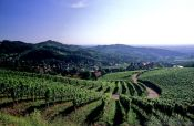 Travel photography:Vineyards above the village of Sasbachwalden in the Black Forest, Germany