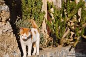Travel photography:Cat at Preveli monastery, Grece