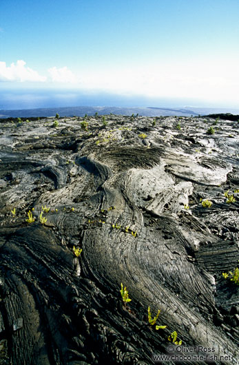 Cooled lava flow in Volcano Ntl Park