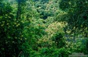 Travel photography:Dense vegetation inside a crater, Hawaii USA