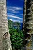 Travel photography:View of Hilo coast through coconut palms, Hawaii USA