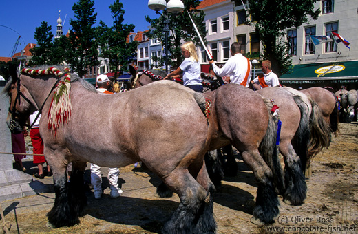 Competition horses at a festival in Vlissingen