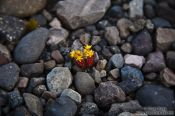 Travel photography:Small survivor near Skeiðarársandur, Iceland