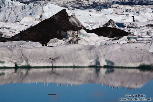 Gulls sitting on an iceberg in Jökulsárlón lake