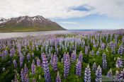 Travel photography:The fjord at Ólafsfjörður, Iceland