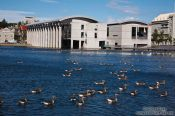 Travel photography:Reykjavik city hall with a flock of geese on the city lake, Iceland