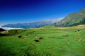 Travel photography:Pasture north of Manali, India