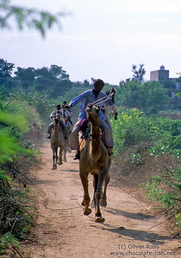 Camel race in Pushkar