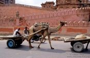 Travel photography:Camel cart outside Junagarh Fort in Bikaner, India