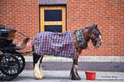 Travel photography:Horse cart in Dublin , Ireland