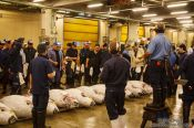Travel photography:Tuna auction at the Tokyo Tsukiji fish market, Japan
